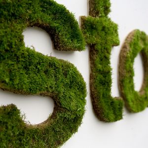 Close-up of moss wall in an office